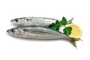 Fisch VitaminB12