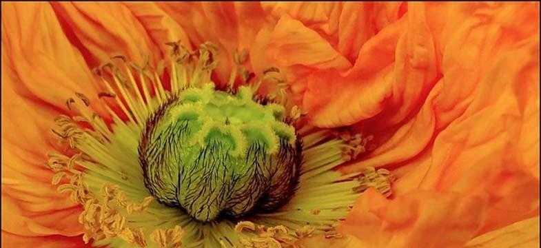 Vitamin B12: Vegetarier und Veganer