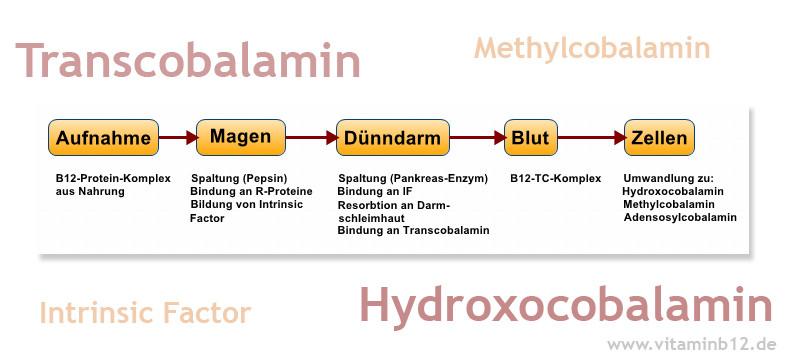 Vitamin B12 Aufnahmestörung