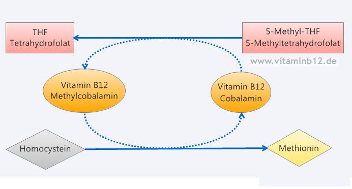Vitamin B12 Folsäure