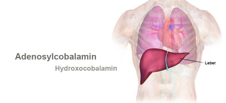 Vitamin B12 Körperspeicher