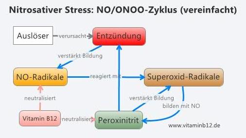 nitrosativer-stress-noonoo
