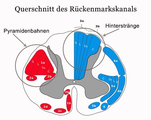 B12 Rückenmark