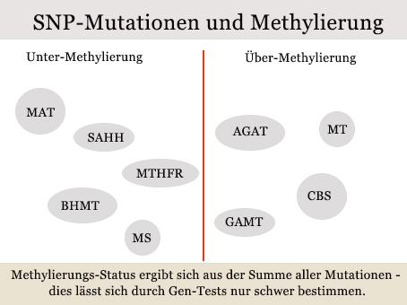Mutationen-und-Methylierung