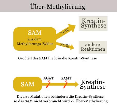ueber-methylierung