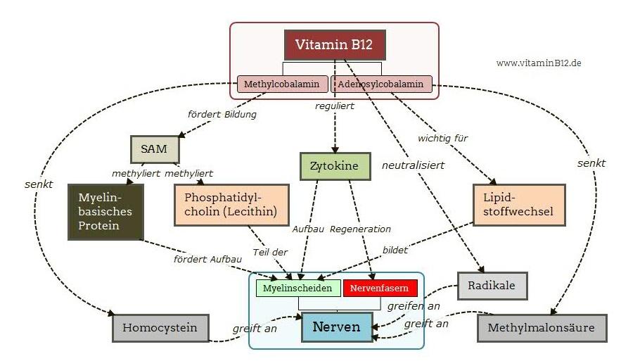 vitamin b12 nerven