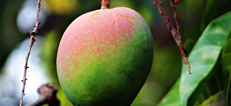 Review: Sind Mango-Kerne eine pflanzliche B12-Quelle?